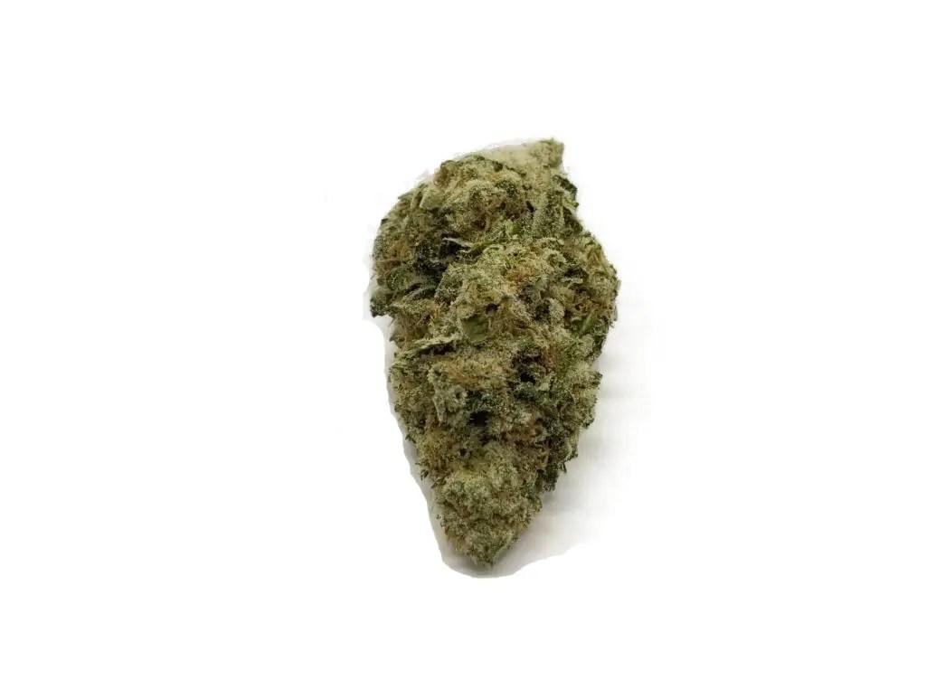 love potion number 1 sativa hybrid cannabis