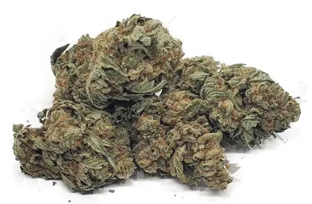 platinum bubba kush strain weed cannabis marijuana featured