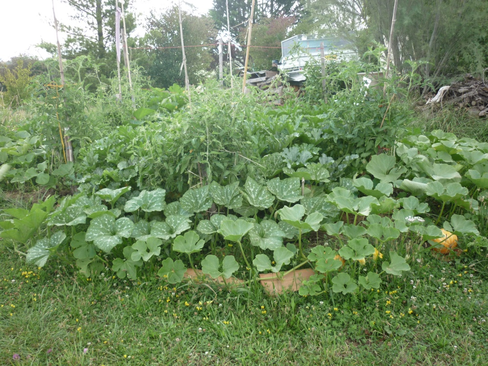 M thode pour savoir o r colter les plantes sauvages for Site de plante