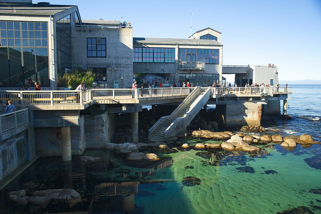 Monterey Bay Aquarium, sets right along the oceanfront