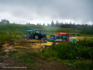 Kanada Nova Scotia Wilde Blaubeeren Ernte auf dem Feld |GourmetGuerilla.de