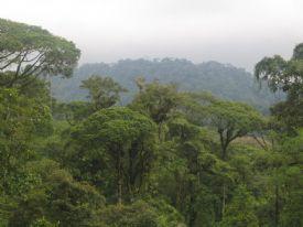Brauilo Carrillo Park Canopy