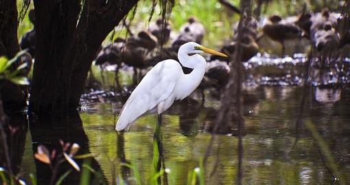 Kakadu National Park Australia Vacations 2019 20 Goway