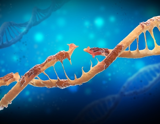 Neuroscientists discover anti-aging molecule that repairs age-related DNA damage