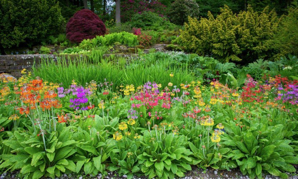 RHS Garden Harlow Carr