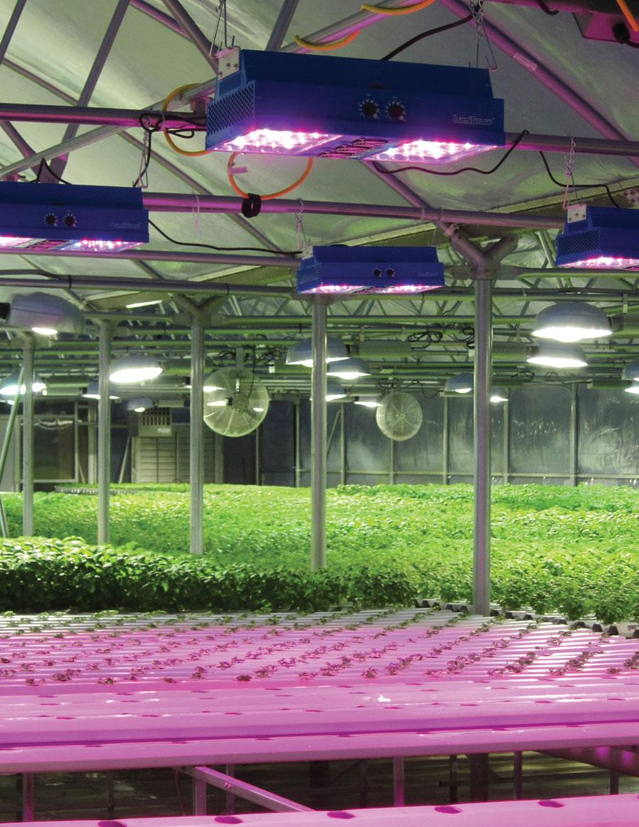 Can Incandescent Light Bulbs Grow Plants