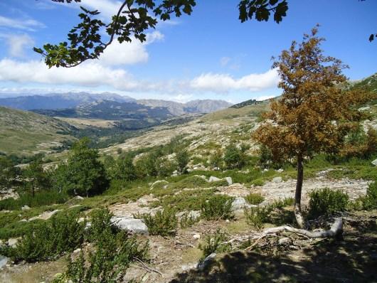 Plateau du Coscione