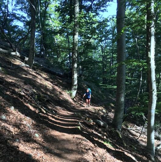 Passage en forêt - GR20 - Corse