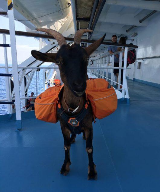 fanny-et-son-sac-dos-ferry-corse