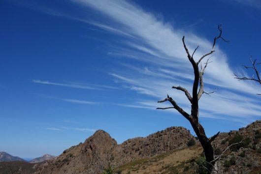 árvore thunderstruck no caminho