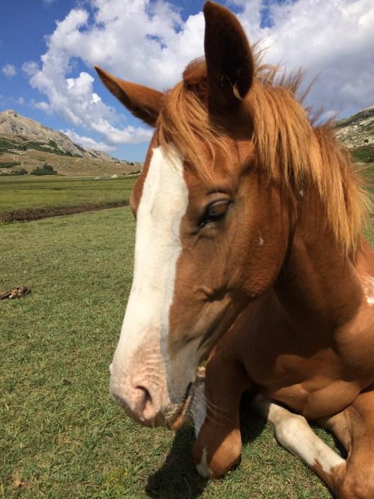 Hest nær søen