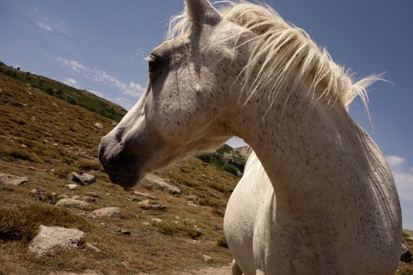 Pferd-Nino See - GR20