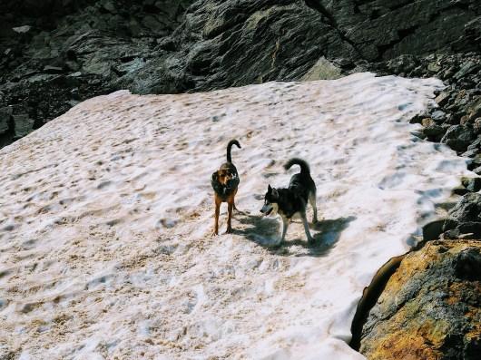 gr20-chien-neige