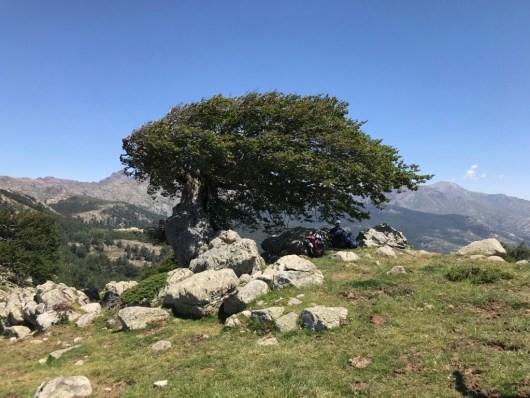 arbre-prairie-corse-gr