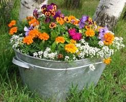 園芸療法、ガーデニング