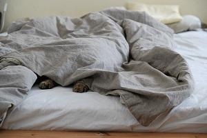 【あさイチ】羽毛布団も長もちさせる技!朝起きたあとのひと手間