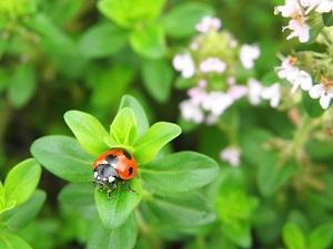 【あさイチ】逃げ回るゴキブリの対処法&虫さされ!プチエマ脱出術