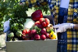 野菜、農園、農業