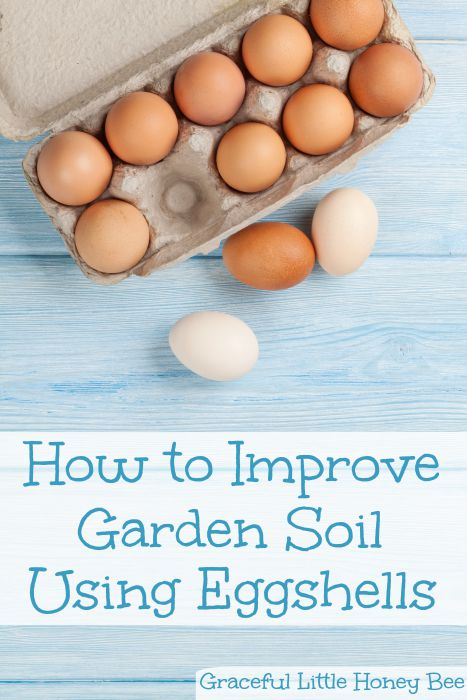 Learn how to improve garden soil using eggshells on gracefullittlehoneybee.com