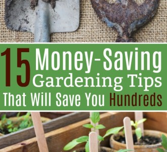 Gardening tools and small tomato plants in biodegradable pots.