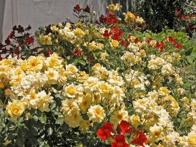 Sunflare Rose and Orange Alstroemeria