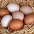 eggs_2300165b