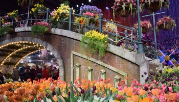 "Philadelphia Flower Show 2017 ""HOLLAND: Flowering the World"" in Philadelphia, Pennsylvania"