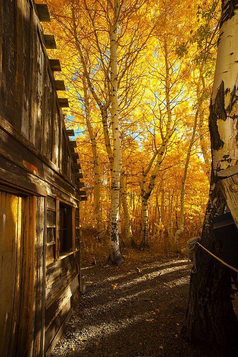 красивата есен