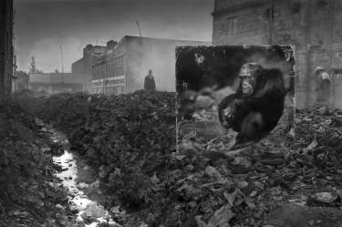 ALLEYWAY-WITH-CHIMPANZEE-3200px