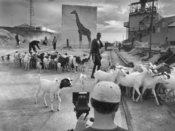 xMAKING OF - Nick Brandt photographing Factory with Giraffe 2160px ©Joshua Yeh