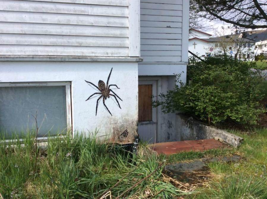 JPS- Spider Street Art. Photo Credit JPS