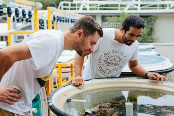 The-Wanderers-episode-Street-Artist -Amok-Island_AMOK ISLAND learns about marine ecosystems from Heron Island Researcher GIOVANNI CARRILLO_credit Callie Marshall_I5A8051