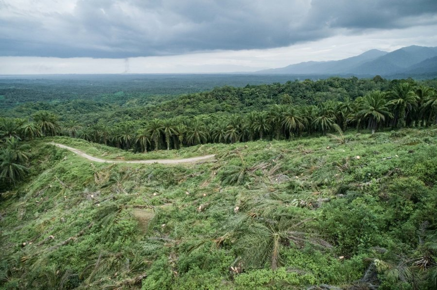 ESCIF, 'REWILD' Splash and Burn, Sumatra 2019. Photo Credit Ernest Zacharevic