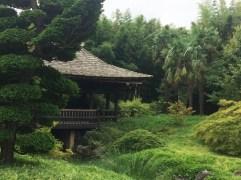 Bambusgarten1