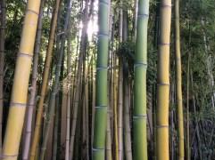 Bambusgarten3