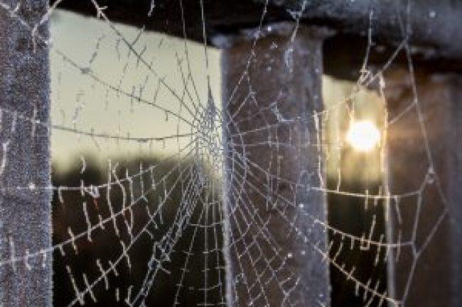 gefrorenens spinnennetz, spiderweb, frozen, gefroren, frozenweb, frozen spiderweb, free stock images, lizenzfreie fotos, kostenlos, download, keine anmeldung, open source, teilen, schenken, winter, fotografie