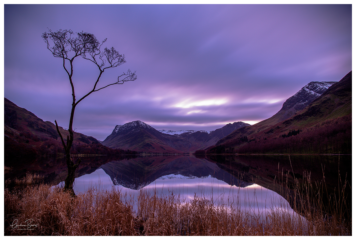 lone tree at lake Buttermere