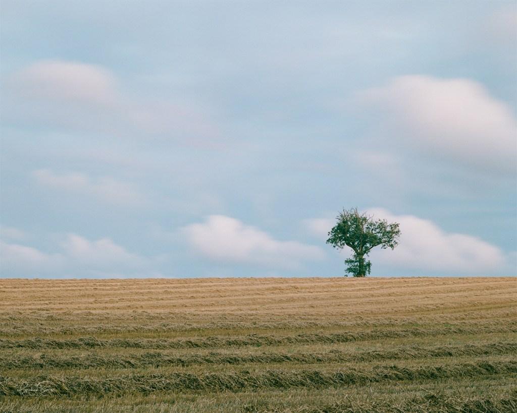Tree on hill 2 Scholes Cleckheaton