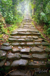 Pathway to a Lost City in Colombia
