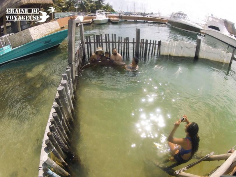 isla mujeres tiburon gato