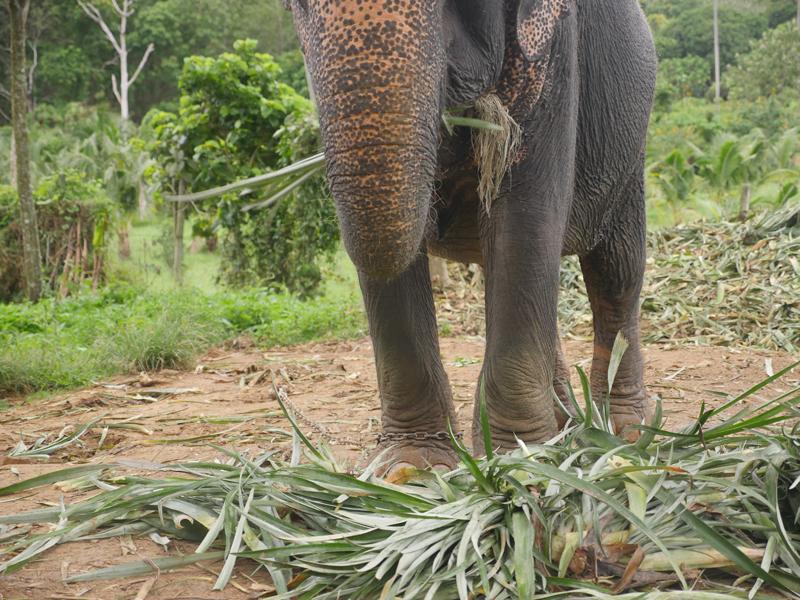 Ne montez pas à dos d'éléphant