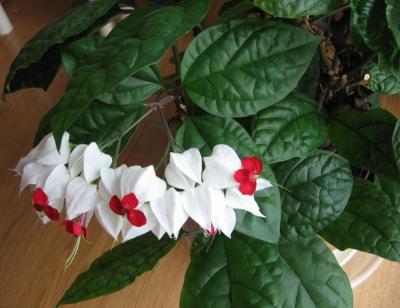 identification de plante d interieur
