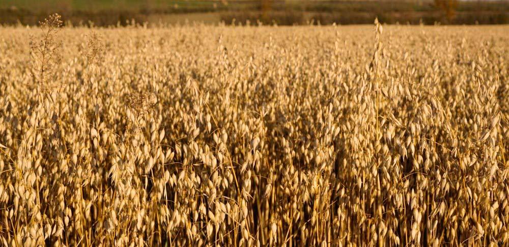 Contact Us | Grain Millers