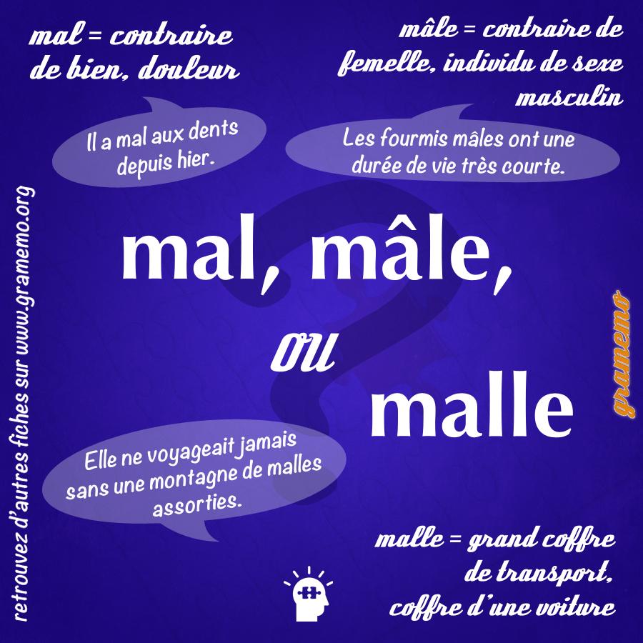 Mal mâle ou malle - Gramemo