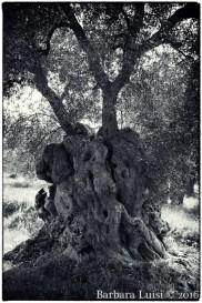 barbara-luisi-vita-aeterna-4