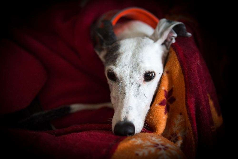 It is hoped the proposed tighter fireworks regulations will help dogs. Picture: Daniela Skalla and The Kennel Club