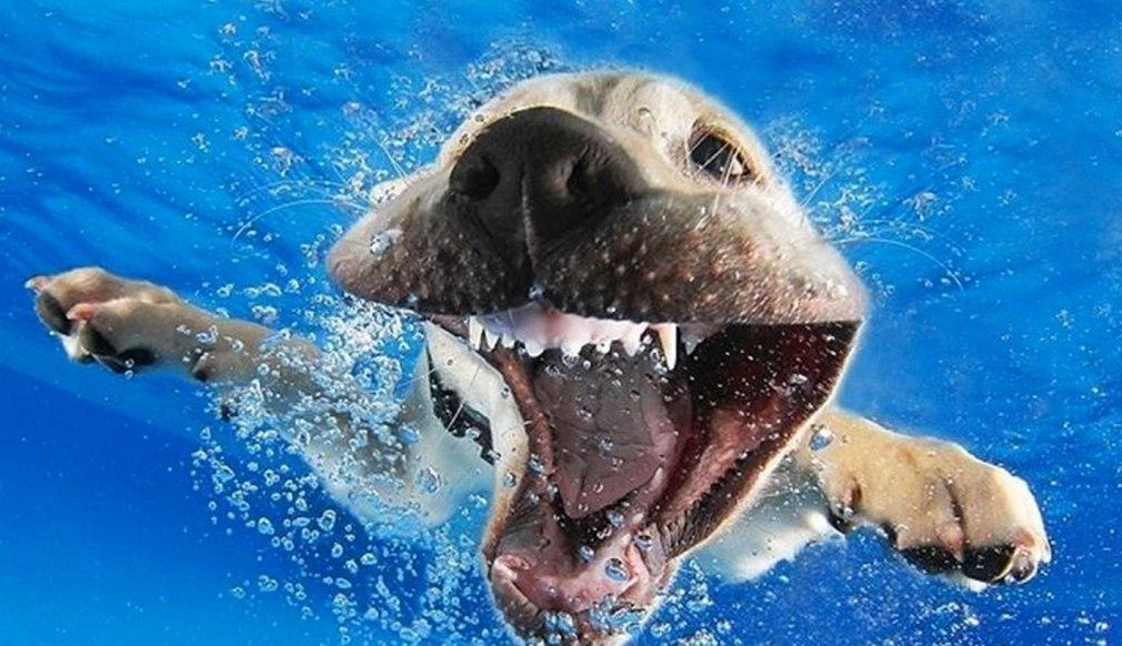 perros-al-agua
