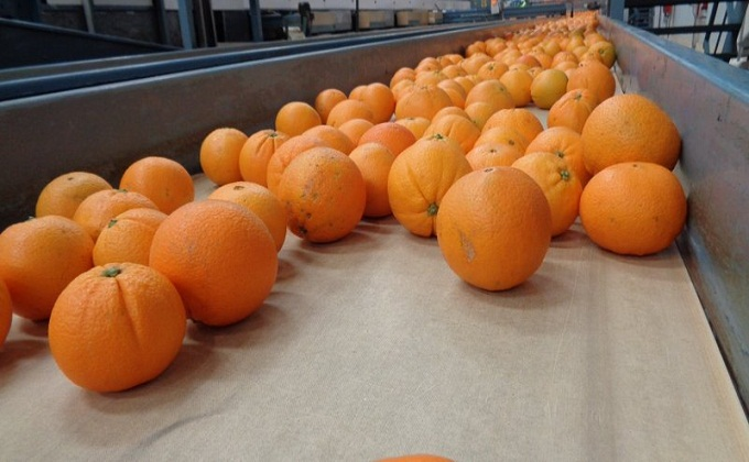 naranjas-veto-ruso