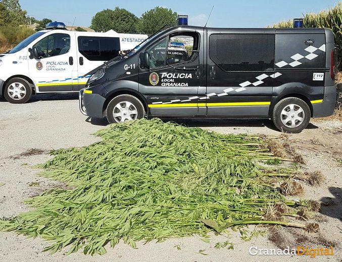 policia-loca-marihuana_result