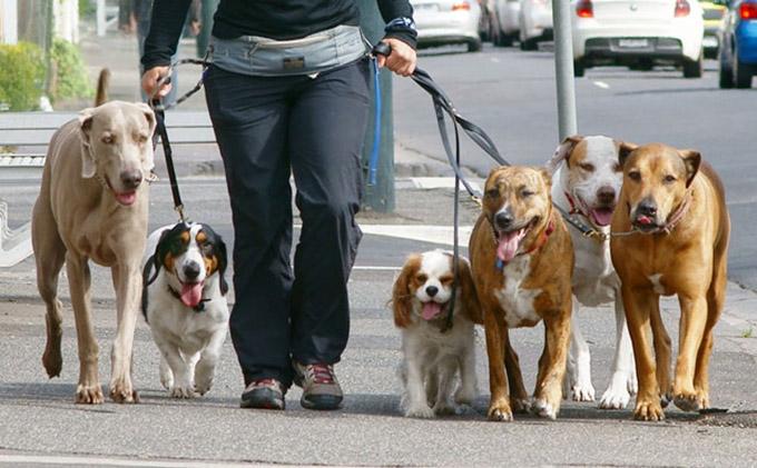 la-guardia-civil-detiene-paseadores-de-perros